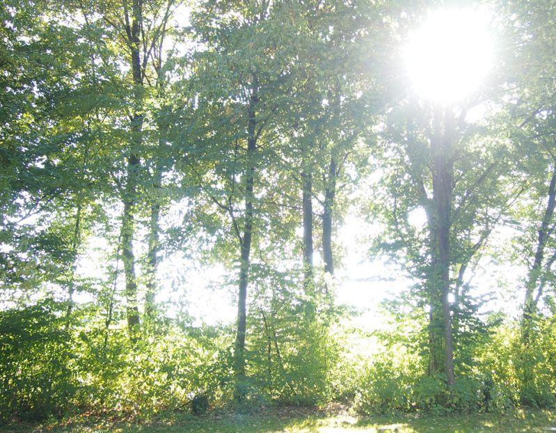 Lichtdurchflutete Laubbäume