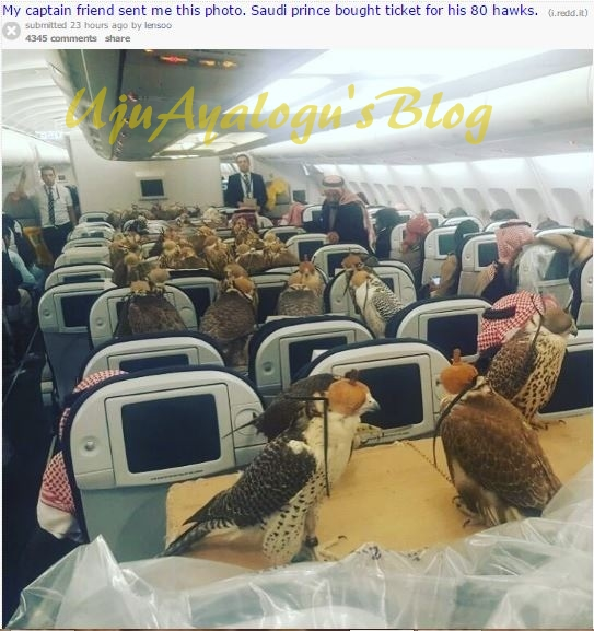 Filthy Rich Saudi Prince Buys Air-Flight Tickets for 80 Hawks (Photo)