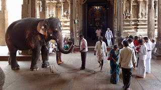 killing-animal-ban-in-lanka-hindu-temple