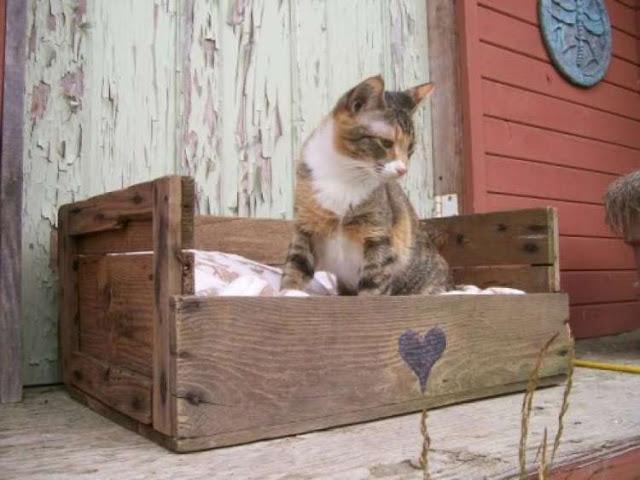reutilizar caixotes de madeira cama pet