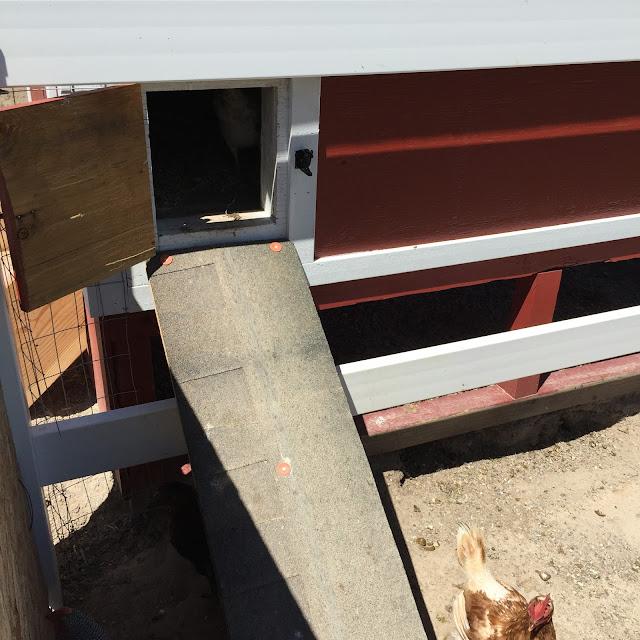Chicken Ramp for Barn Chicken Coop