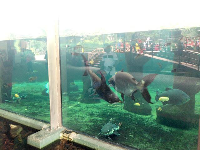 aquarium zoo negara