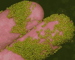 Angiospermae: Pengertian, Ciri-Ciri dan Contoh