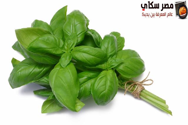 15 نبات هام ومفيد لصحة ونعومة الشعر الجزء الأول Useful plant for hair