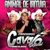 CD (AO VIVO) CAVALO SOUND NO BDAY DO CAPOEIRA VILA FORMOSA PIRIA 25/08/2018 - DJ MILKY