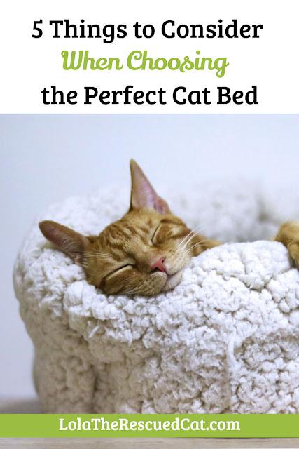 perfect cat bed|catvills.com