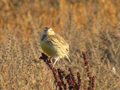 Llano Seco Wildlife Area