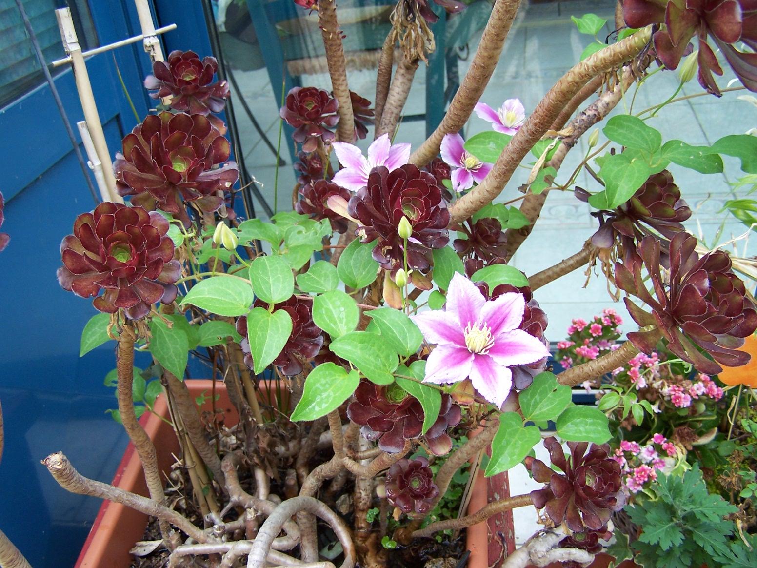 Quelle plante mettre sur un balcon en plein soleil Jardinier Pro