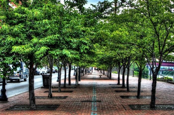 codice vertigo gli alberi in citt fanno bene ai polmoni