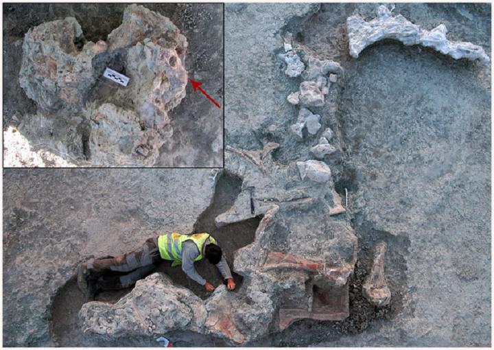 Rare braincase provides insight into dinosaur brain - The ...