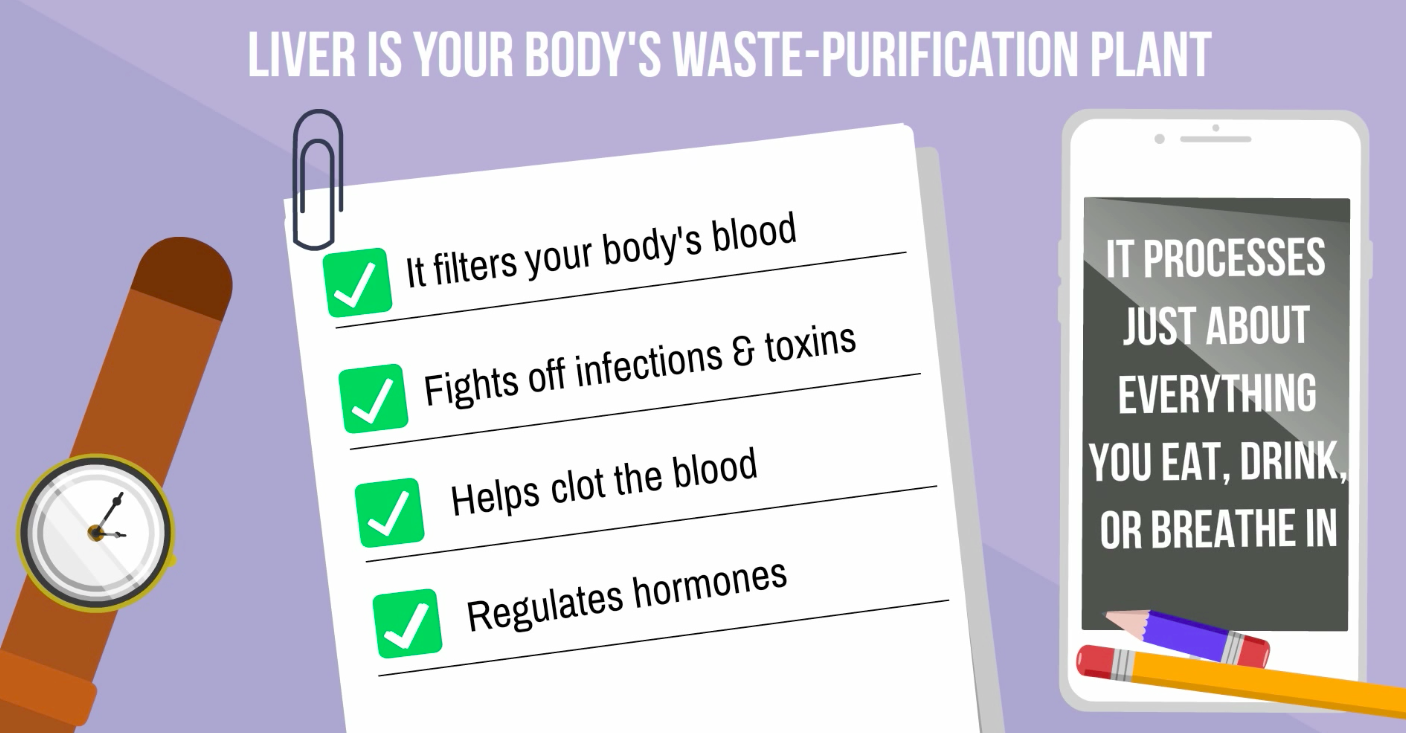 Help Your Liver With The Function Of Cleaning Out Toxins