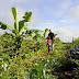 Curso de Agricultura Sintrópica em Sabáudia