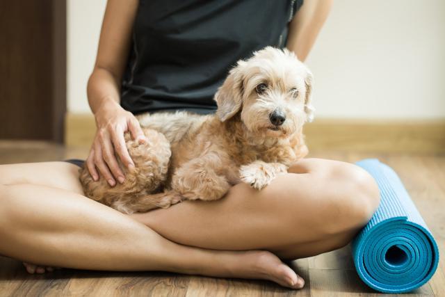 Cách phòng ngừa và điều trị bệnh Alzheimer ở chó