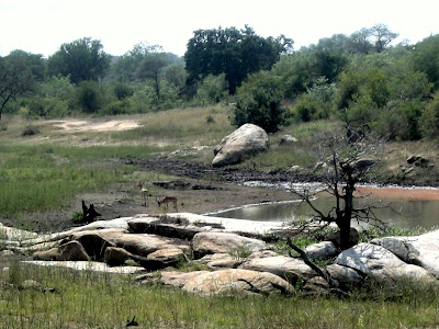 Kruger National Park, water hole, watering hole, safari, South Africa