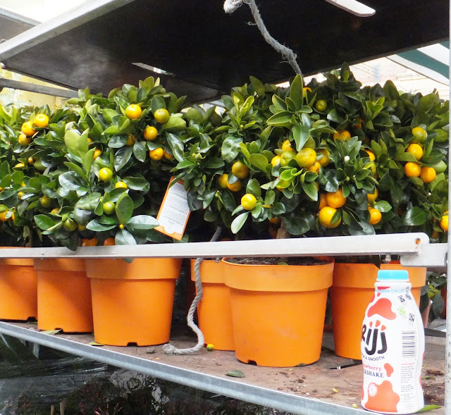 Kinotos, Columbia Road,Flower Market, Londres, London, Mercado de Flores, Blog de Viajes, Travel Blogger, Elisa N