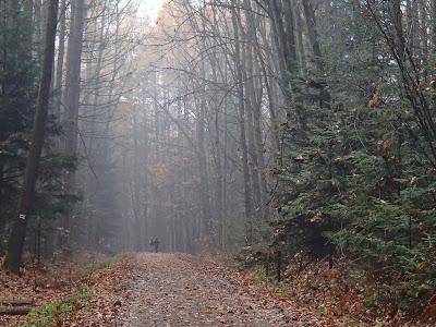 grzyby 2016, grzyby w listopadzie, grzyby w okolicy Krakowa, grzyby jesienią, pieprznik trąbkowy Cantharellus tubeaformis, łysiczka niebieskozielona ( pierścieniak grynszpanowy) – Stropharia aeruginosa, szmaciak=-gałęzisty-siedzuń-sosnowy-Sparassis-crispa, podgrzybek-brunatny-Boletus-badius, monetnica-maślana-Rhodocollybia-butyracea
