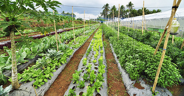 Costales Nature Organic Farms in Laguna Philippines