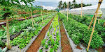 Top 6 Organic Farms and Restaurants in the Philippines