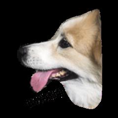 dog bangkeaw