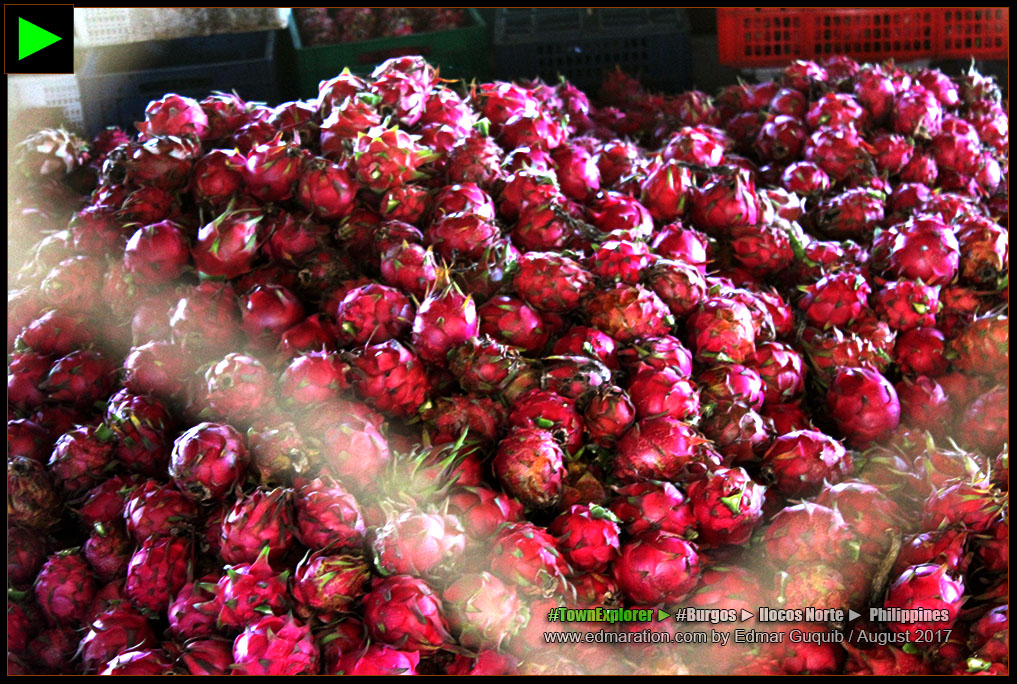 REFMAD DRAGON FRUIT FARM