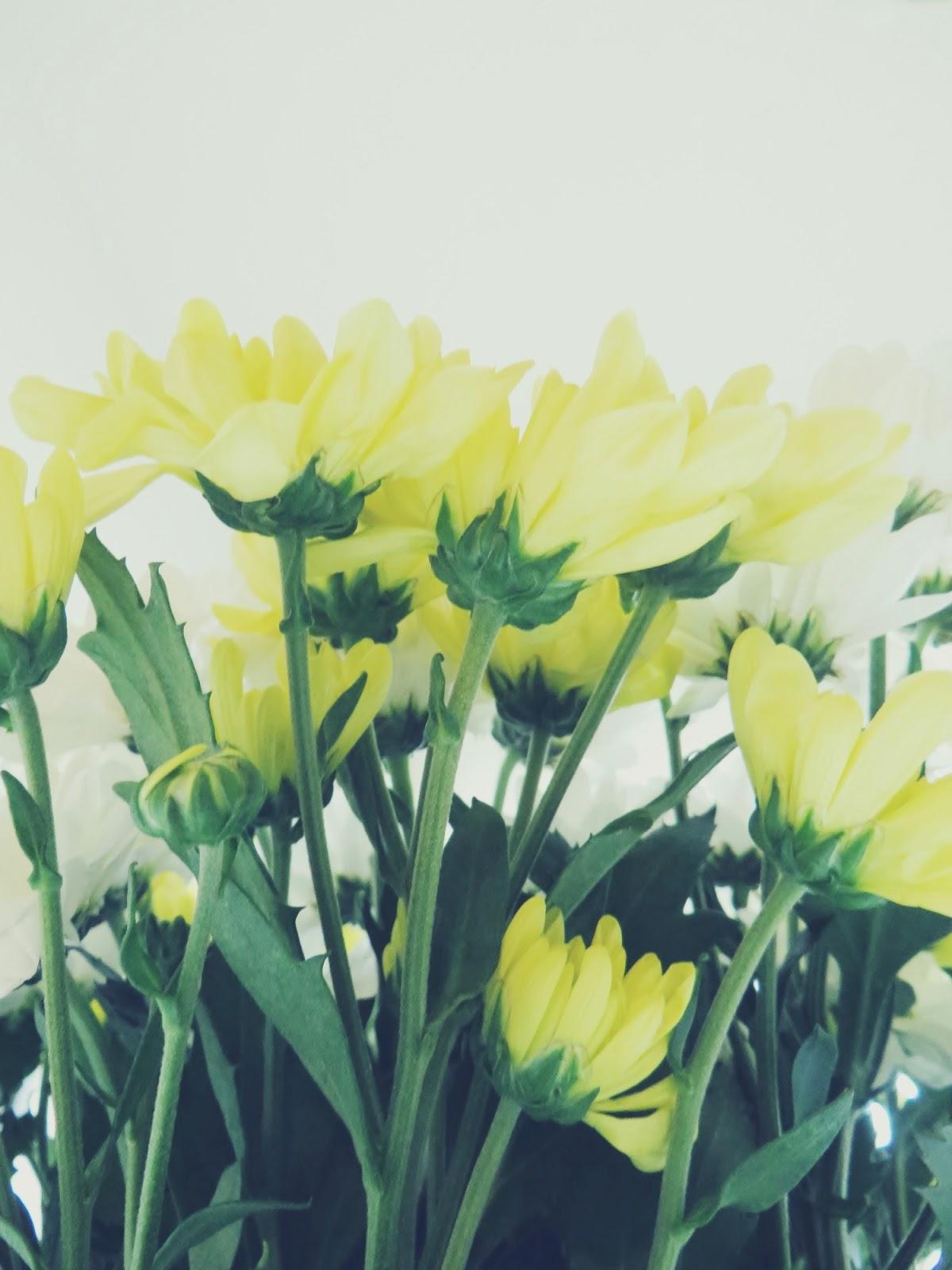 flowers, krysanteemit, krysanteemi, kukat, kukkia