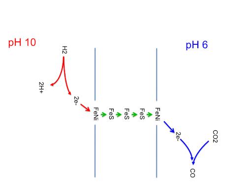 Life (22) FeNi hydrogenase
