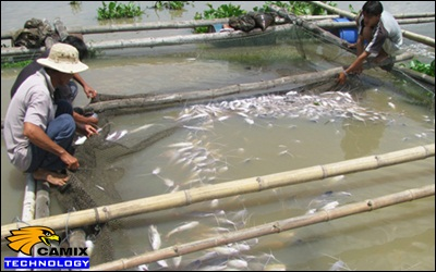 """Công ty tư vấn đầu tư thiết bị xử lý nước thải nhà máy thủy sản - Người nuôi trồng thủy sản """"khóc ròng"""" vì thiệt hại"""