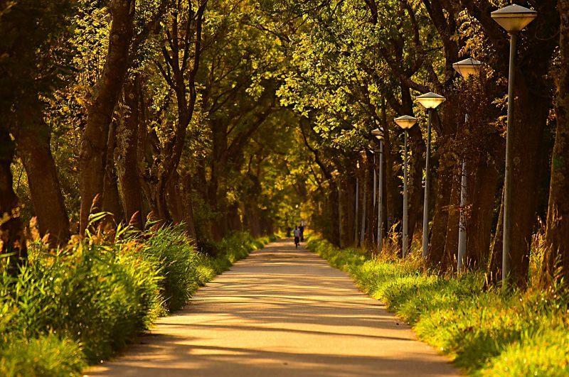 Árvores na cidade