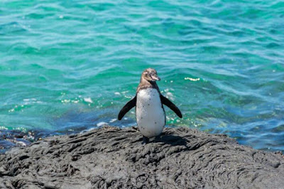 Tips so that your visit to Galapagos does not affect the birds and other animals.