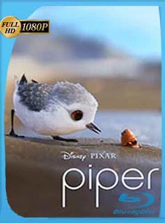 Piper 2016 HD [1080p] Latino [GoogleDrive] DizonHD