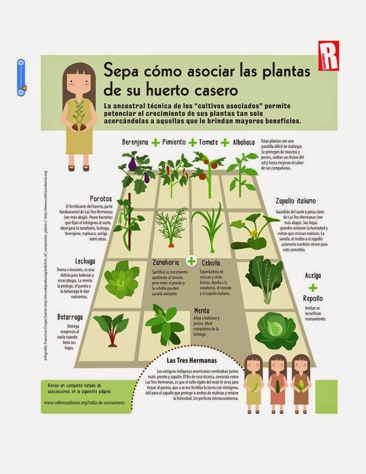 Cultivar el huerto casero beneficios de la asociaci n de - Que plantar en el huerto ...
