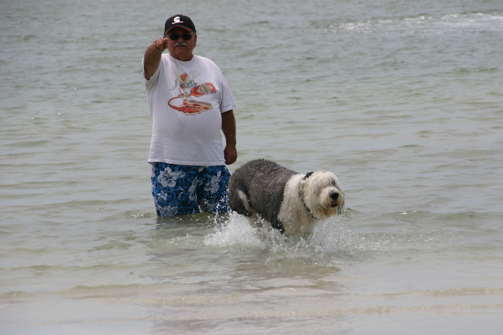 Mirra Goes To Bonita Springs Dog Beach