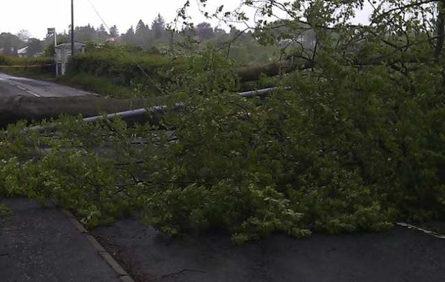 Πρέβεζα: Οι ισχυροί άνεμοι προκάλεσαν πτώσεις δέντρων - Προσοχή στους οδηγούς