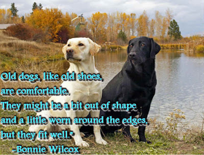 inspirational thoughts: old dogs, like old shoes, are comfortable, they might be a bit out of shape