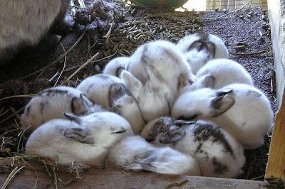 Cara Terbaik Merawat Kelinci Ketika Musim Hujan