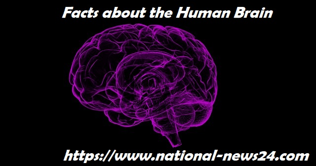 human-brain-facts,human-brain-facts-on-memory,interesting-facts-about-brain-learning,brain-facts,interesting-facts-about-brain-psychology,facts-about-brain-kids,how-human-brain-works