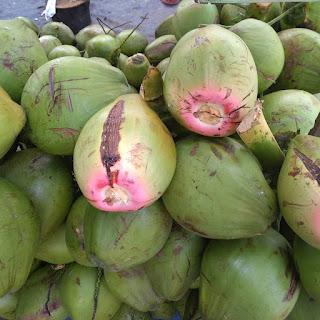 bacaan kelapa wulung