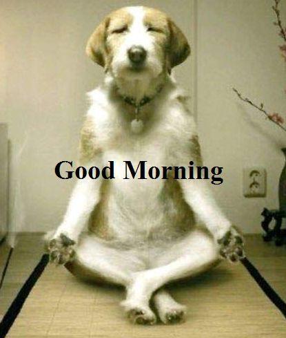 Good Morning Sunday Images Funny Archidev