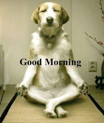 Funny good morning images and photos - Dog doing morning Yoga