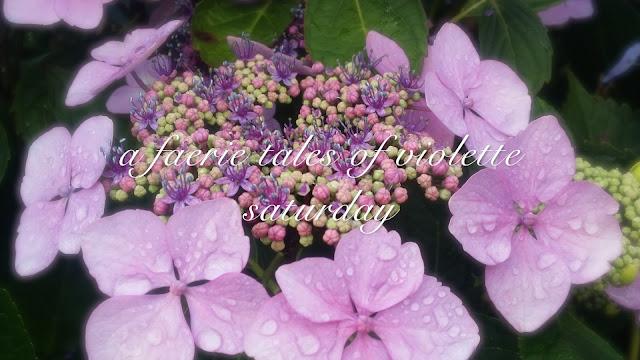 violette flowers