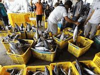 Daftar Negara Tujuan Ekspor Ikan Terbesar