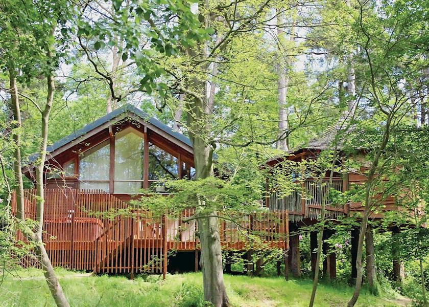 20 of the Best Places to Stay near Flamingo Land  - Golden Oak Treehouse Keldy