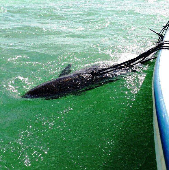 Noticias de Yucatán. Noticias de Hoy: río lagartos