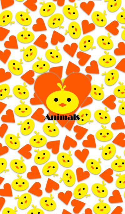 Animals -Yellow chick-
