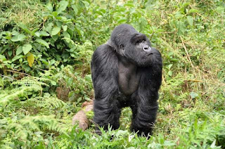 4 Days Gorillas and Bisoke Hike.