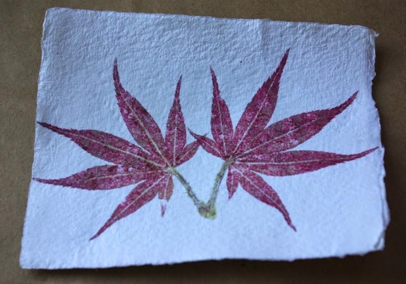 Impresiones naturales de plantas y flores en papel de acuarela1