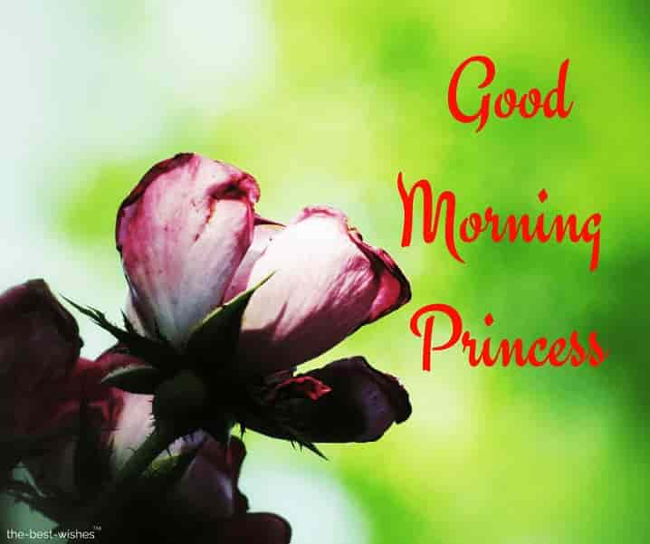 good morning wishes to princess
