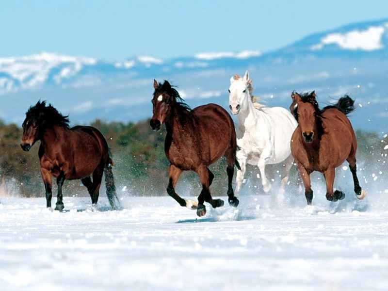 Toggi Gimkana Bambini Stivali Da Equitazione