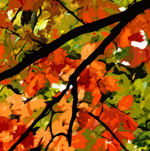 Autumn Ablaze by Jean Hall