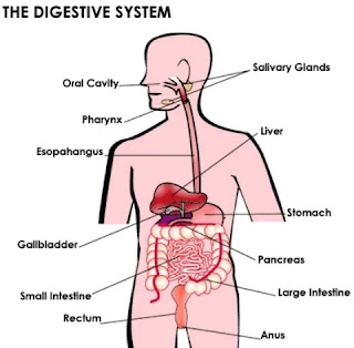 Understanding Crohn's disease, Health Effects And Causes